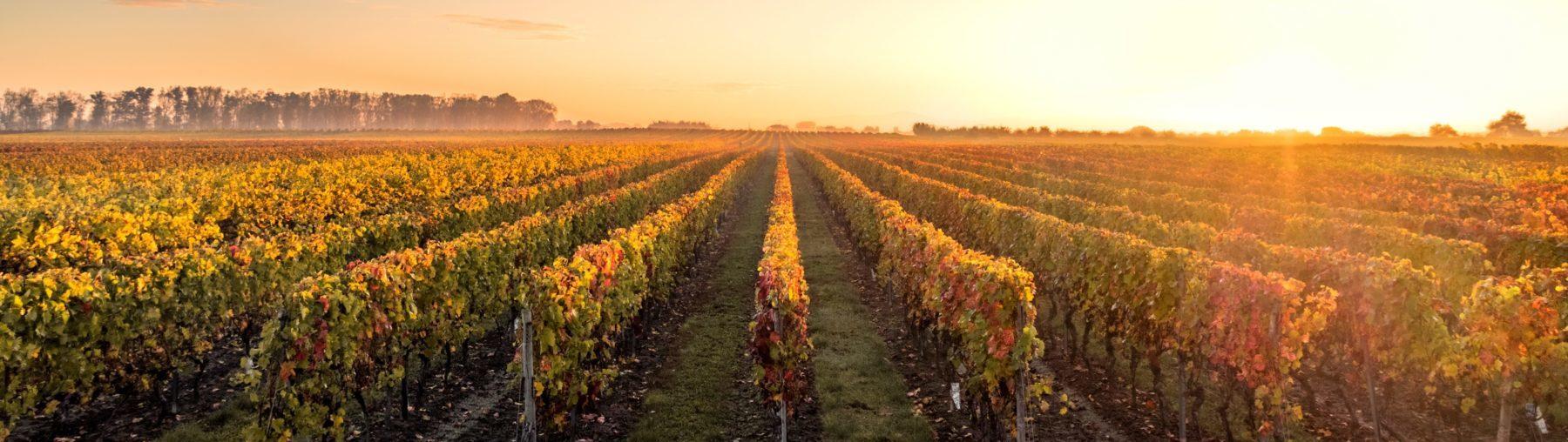 vin elegance tara abernethy wine imports canada