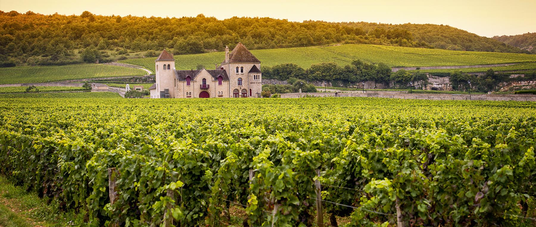 vin elegance fine wine importer france